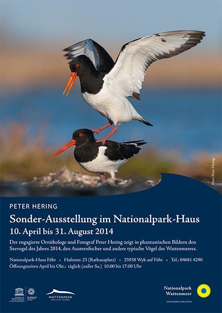 Plakat A4 IZ Föhr Peter Hering.indd