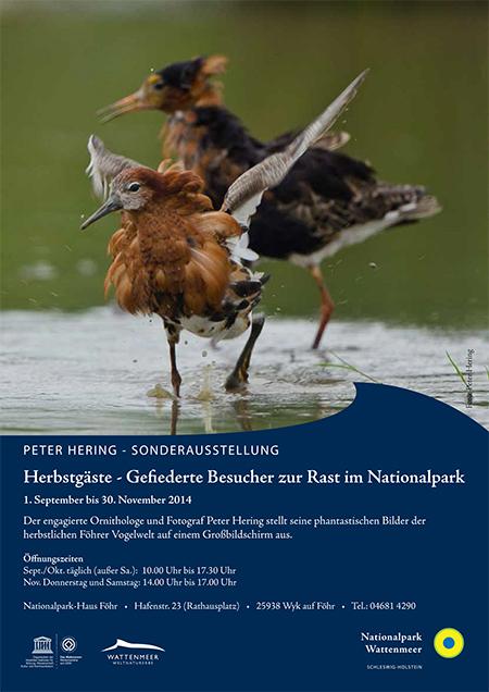 Plakat A4 IZ Föhr Peter Hering 2014 kl