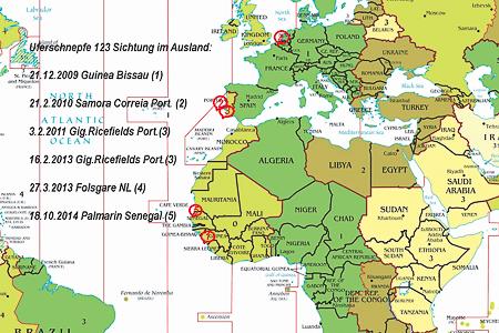 Sichtungen der Uferschnepfe 123 im Ausland