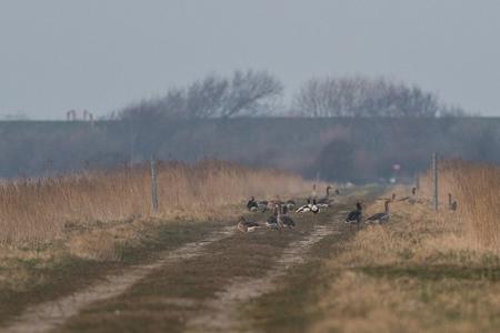 Am 15.März hätte der Weg gesperrt werden sollen. Das Bild entstand 3Tage danach.