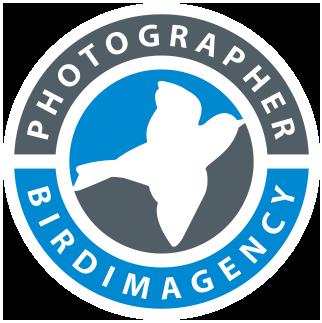 birdimagency